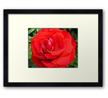 Red In Your Face Framed Print