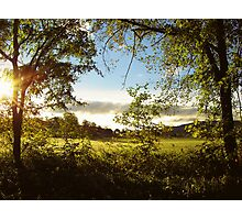 Golden Spring Morning Photographic Print