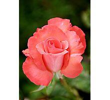 Cobra Rose Photographic Print