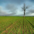 Field in Late Autumn by Martins Blumbergs