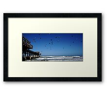 Pigeons At The Beach Framed Print