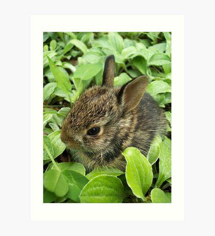 Sweet Baby Rabbit Art Print