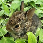 Sweet Baby Rabbit by NatureGreeting Cards ccwri
