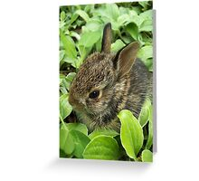 Sweet Baby Rabbit Greeting Card