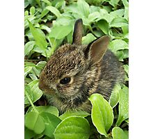 Sweet Baby Rabbit Photographic Print