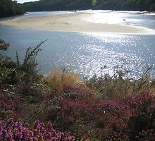Scenic view in Brittany by dolphin