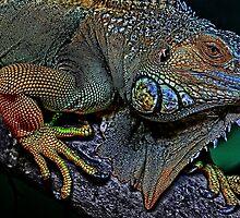 Iguana by grezmel