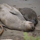 sleepin seals by Amanda Huggins