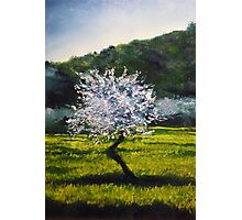 ALMOND TREE IN BLOSSOM - very much inspired by impressionist masters... Van Gogh, Monet, Pissaro, Renoir...  Photographic Print