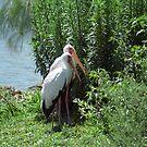 Two Storks by Kristin Nichole Hamm