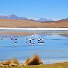 Flamingos in a Salar Laguna. by Honor Kyne