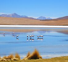 Flamingos in a Salar Laguna. by Honor Kyne