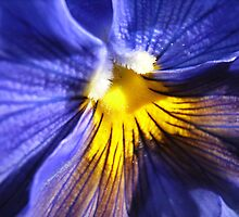 blue by Floralynne