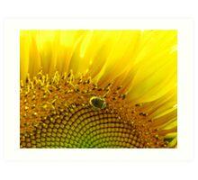 Bee Searching Art Print