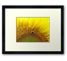 Bee Searching Framed Print