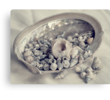 Shells in a Shell #2 Canvas Print