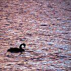 Sunrise Swan by Asoka