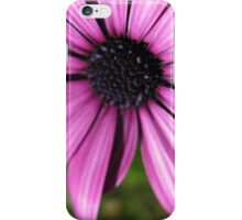 The Daisy & Eensy Weensy Spider  iPhone Case/Skin