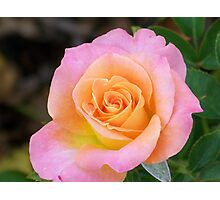 A Rose For Your Thoughts! Photographic Print