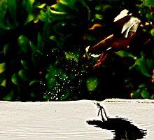 bird laugh by Bradley Wilder