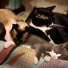 Sleepy Time - A Family Affair by Scott Denny