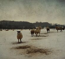 Winter Sheep by Sarah Couzens