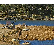 Fishing Sculptures - Lake Crackenback Photographic Print