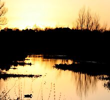 Lagan Sunset by Laura Cameron