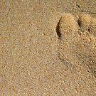 Footprint by Kathryn Steel