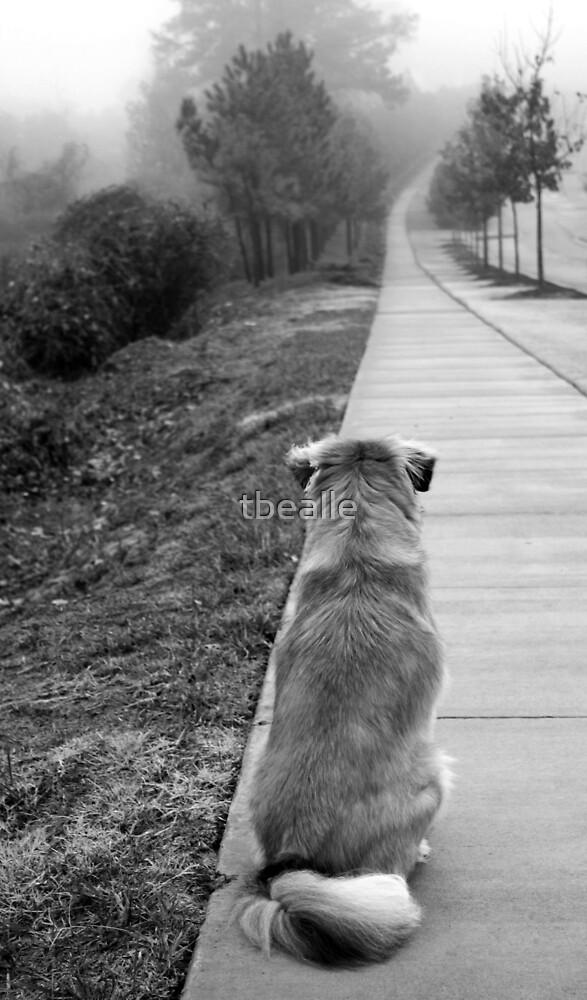 Life is a Journey... Follow Your Path! by Terri~Lynn Bealle