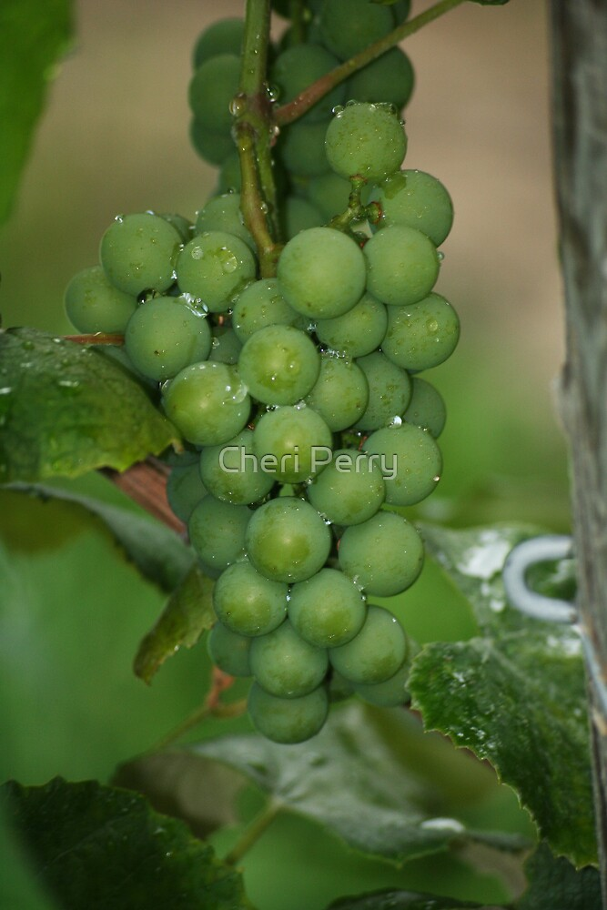 Grapes by Cheri Perry