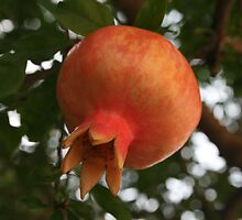 Pomegranate by Sue Ellen Thompson