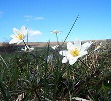Meadow flowers by Luckyman