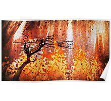Flaming Tree,Great Ocean Road,Australia. Poster