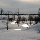 A Bright Winter Day by Danielle Girouard