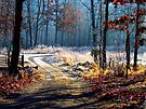 Winter Frost by NatureGreeting Cards ©ccwri