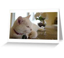 DeeDee the Cat Greeting Card