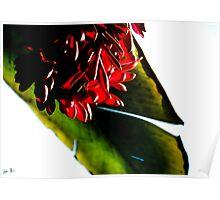 Hawaiin Flowers Poster