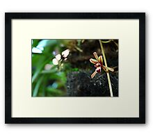 brown orchid Framed Print