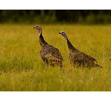 Osceola Turkeys Photographic Print