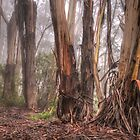 In The Forrest - Mount Wilson NSW Australia - The HDR Experience by Philip Johnson