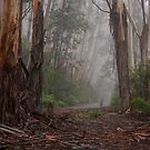 Giants In The Mist - Mount Wilson NSW Australia - The HDR Experience by Philip Johnson