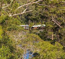 Beedelup National Park, Nr. Pemberton, Western Australia #2 by Elaine Teague