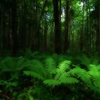 Fern Forest by Martins Blumbergs