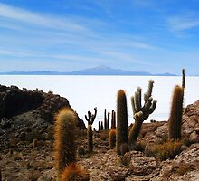 Salar Uyuni by Honor Kyne