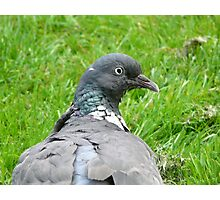 Garden Bird Photographic Print