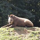 Tapir To The Top and Smile by CreativeEm