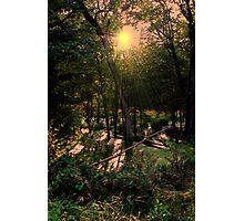 Wild Swamp Blush Photographic Print