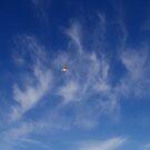 Feathers.....aloft.. by Larry Llewellyn