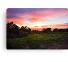 Scouting Sunsets in January. Canvas Print